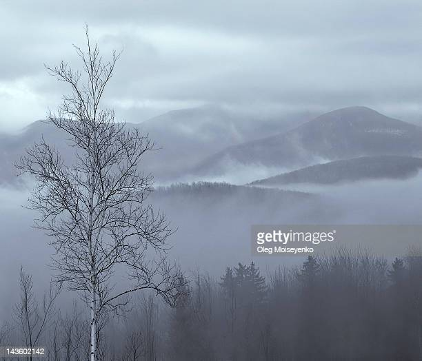 Trees and mountains in mist