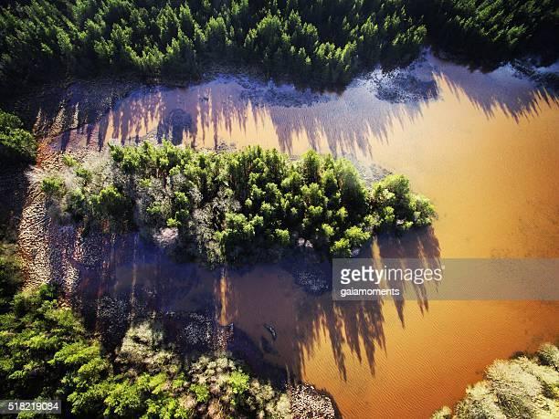 Trees and muddy lake