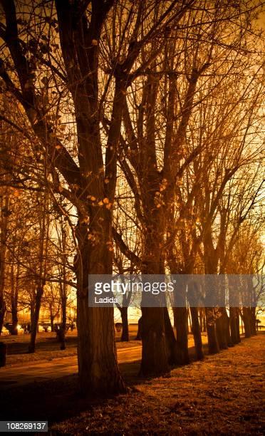 秋の公園で木々や