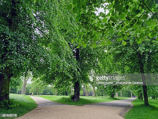 Trees and Paths at Hyde Park