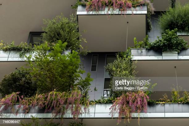 Trees And Plants Against Building