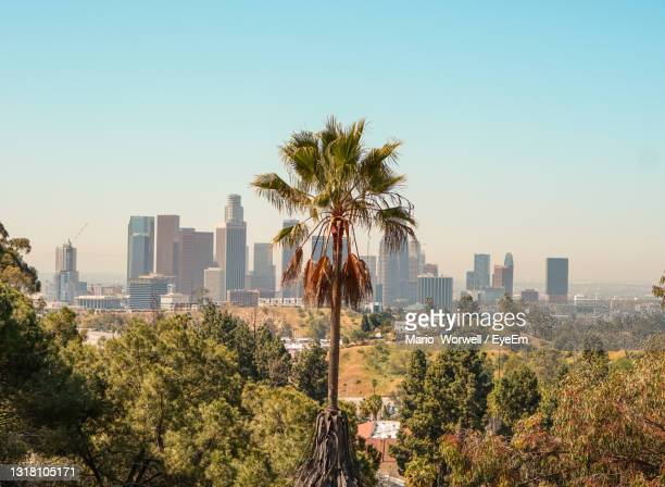 trees and plants growing in city against clear sky - los angeles stock pictures, royalty-free photos & images