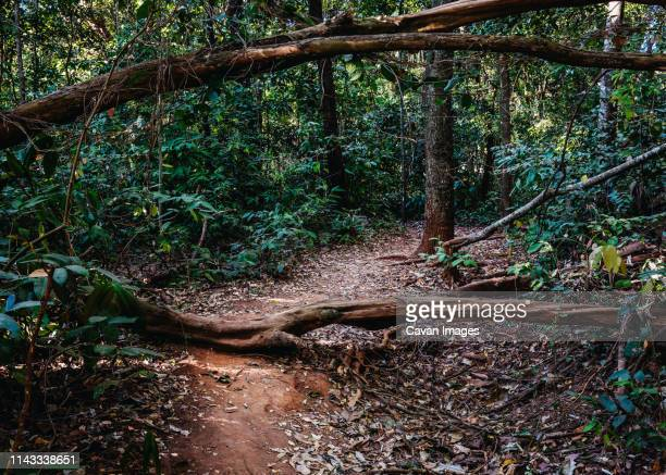 trees and plants growing in forest - goiania stock pictures, royalty-free photos & images