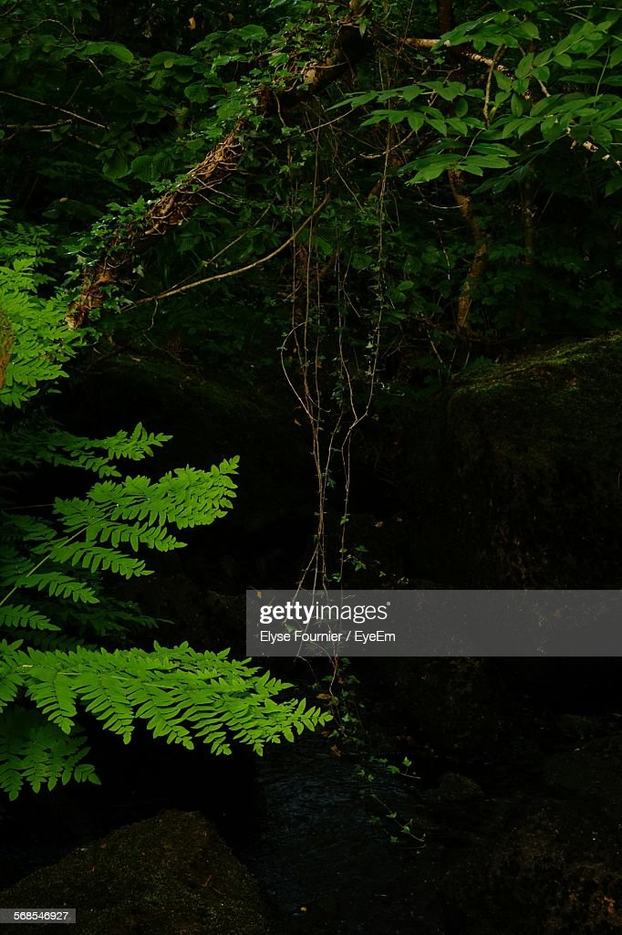Trees And Plants In Forest : Stock Photo