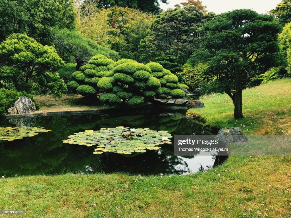 Trees And Plants In Garden : Stock Photo