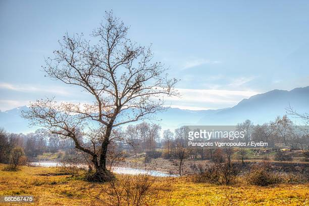 trees and plants on field against sky during autumn - vgenopoulos stock pictures, royalty-free photos & images