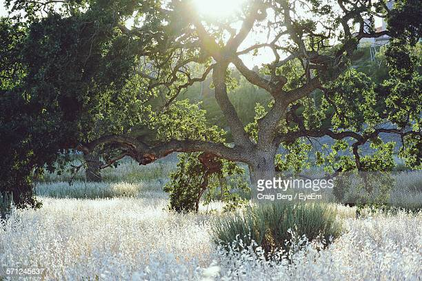 trees and plants on field - simi valley stock photos and pictures