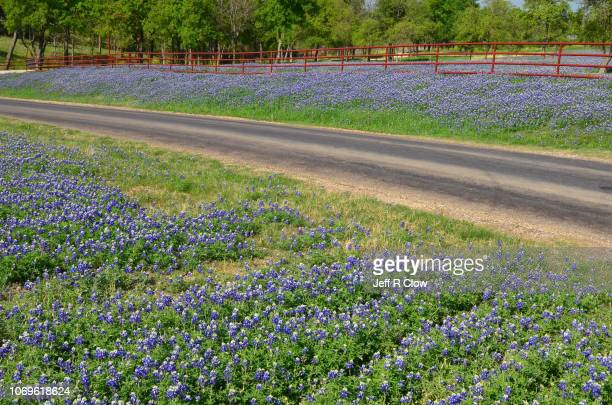 trees and road and bluebonnets in texas - texas bluebonnet stock pictures, royalty-free photos & images
