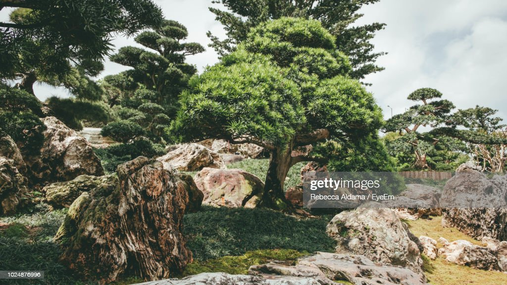 Trees And Rocks In Forest Against Sky : Stock Photo
