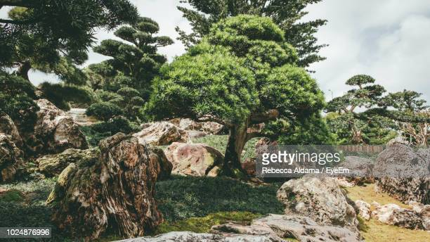 Trees And Rocks In Forest Against Sky