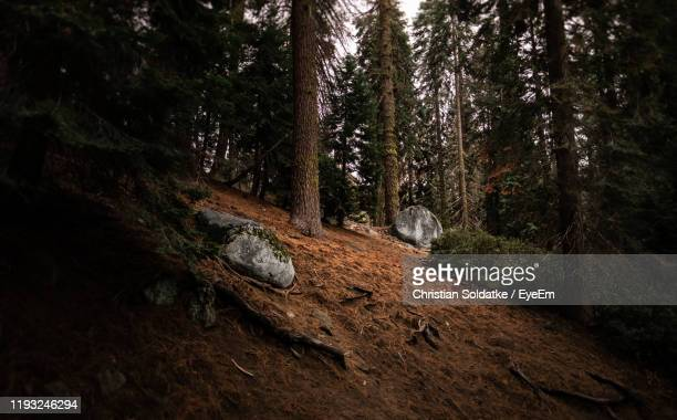 trees and rocks in forest - christian soldatke stock pictures, royalty-free photos & images