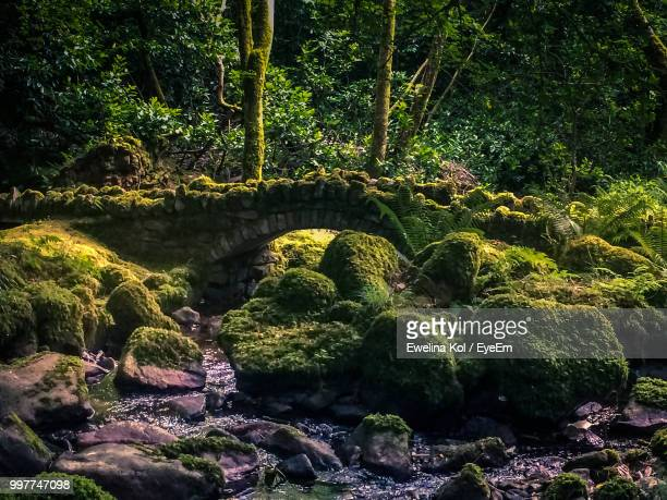 Trees And Rocks In Forest