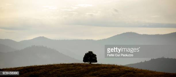 trees and rural scene near medford, oregon, usa - medford oregon stock photos and pictures