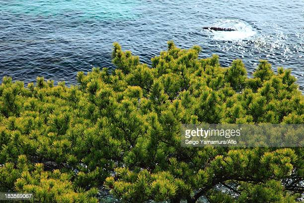 trees and sea - naruto stock photos and pictures