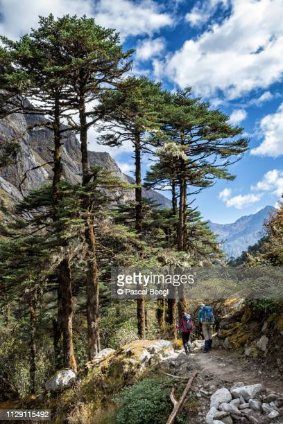 trees and sky on the way to tampoe tsho, wangdue phodrang district, snowman trek, bhutan - bhutan stock pictures, royalty-free photos & images