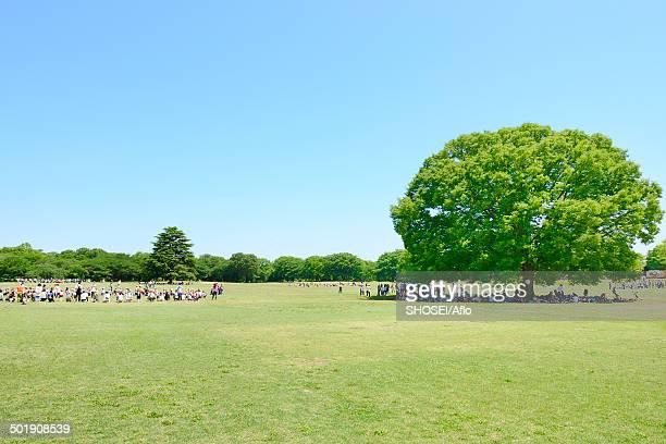 trees and sky - 背景に人 ストックフォトと画像
