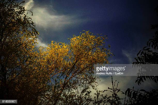 trees and sky - andres ruffo stock pictures, royalty-free photos & images