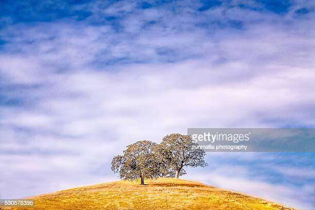 trees and sky - マーセド郡 ストックフォトと画像