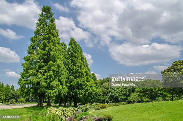 trees and sky - aichi prefecture stock pictures, royalty-free photos & images