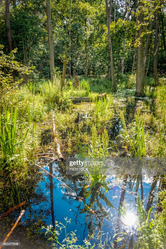 Trees and sky reflected in water : Stock Photo