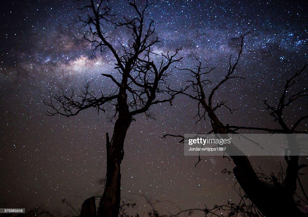 Trees and stars : Stockfoto