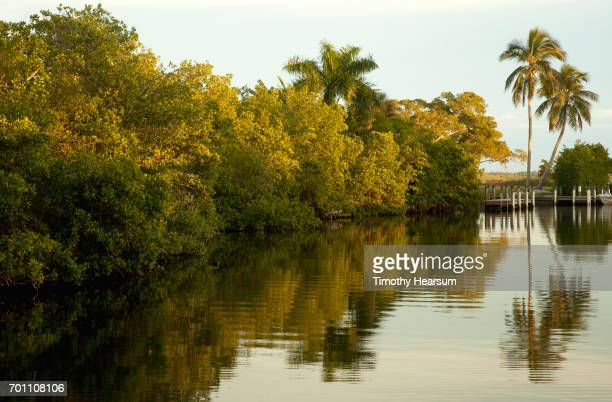 trees and their reflections in a still canal; late afternoon light - timothy hearsum stock photos and pictures