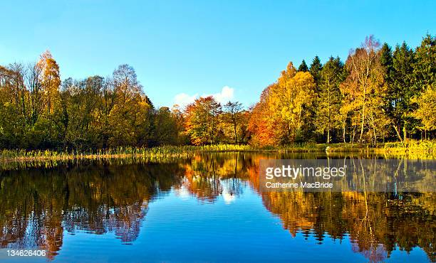 trees and their reflections in autumn - catherine macbride stock pictures, royalty-free photos & images