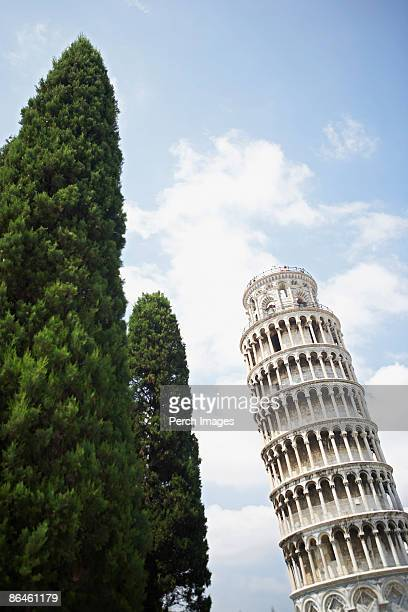 Trees and Tower of Pisa, Italy
