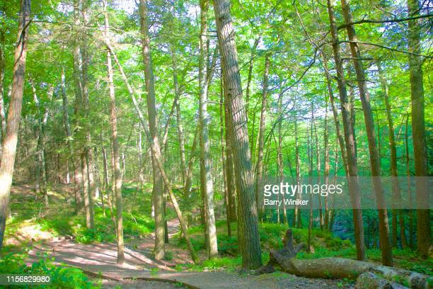 trees and trail, kent falls, ct - barry wood stock pictures, royalty-free photos & images