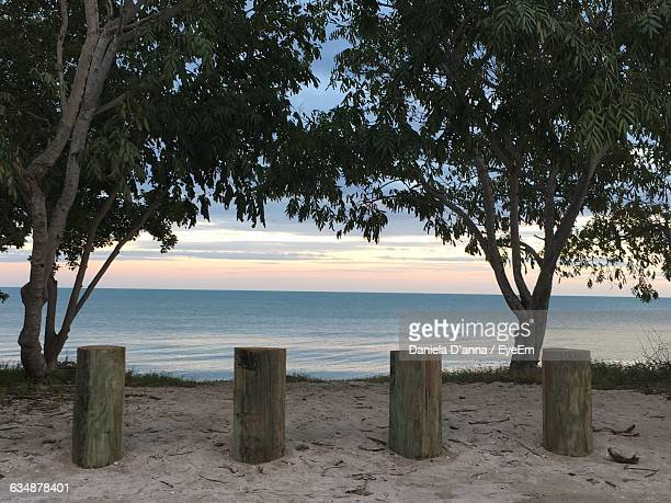 Trees And Wooden Posts At Beach