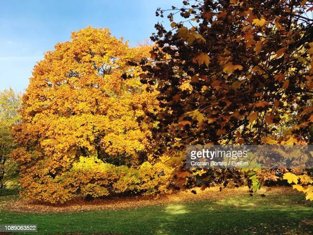 trees and yellow flowers on field during autumn - bortes stockfoto's en -beelden