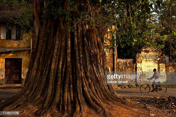 Trees are often fascinating in India. Here in Fort Cochin. Kerala