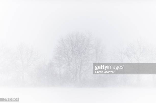Trees are pictured during snow storm near the germanpolishczech border triangle at the Zittauer Mountain on January 02 2019 in Waltersdorf Germany