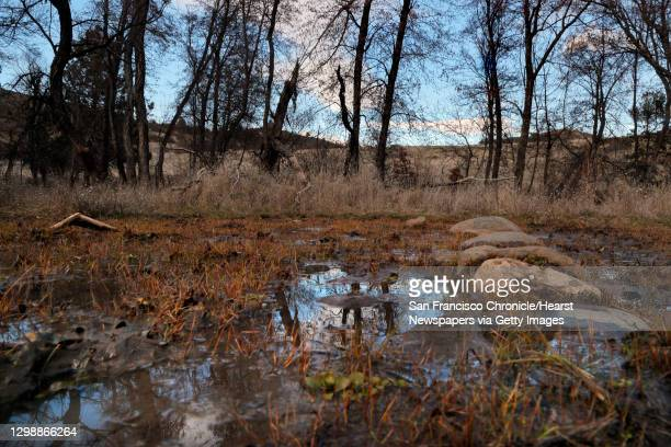 Trees are reflected in small puddles left by horse hoof imprints near Slide Creek in Horseshoe Ranch Wildlife Area in the Cascade-Siskiyou National...