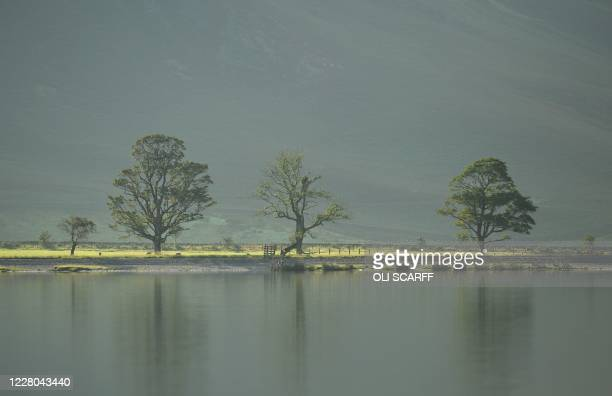 Trees are reflected in the water of Buttermere Lake early in the morning, in the Lake District in north west England on August 14 as many people take...