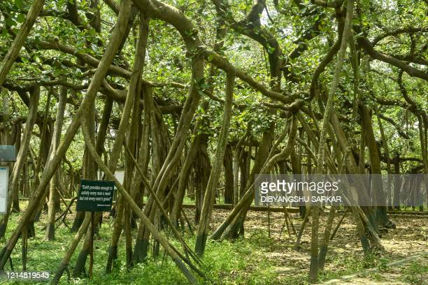Trees are seen following the landfall of cyclone Amphan at the Indian Botanical Garden in Kolkata on May 24 2020 One of Asia's oldest botanic gardens...