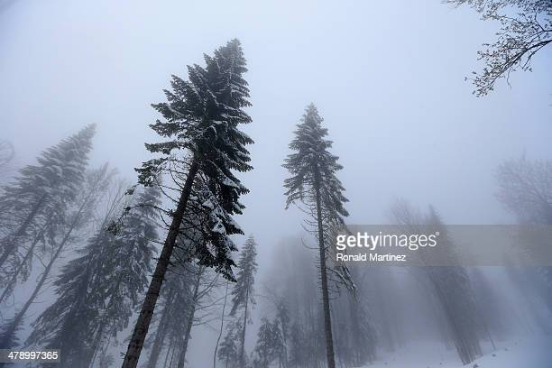 Trees are seen in the fog after the Mixed 4 x 25km Relay CrossCountry Skiing event during day eight of Sochi 2014 Paralympic Winter Games at Laura...
