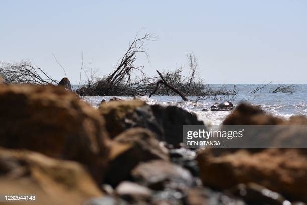 Trees are seen in the water following a coastal cliff fall on Dorset's Jurassic Coast near the village of Seatown, on the south west coast of England...