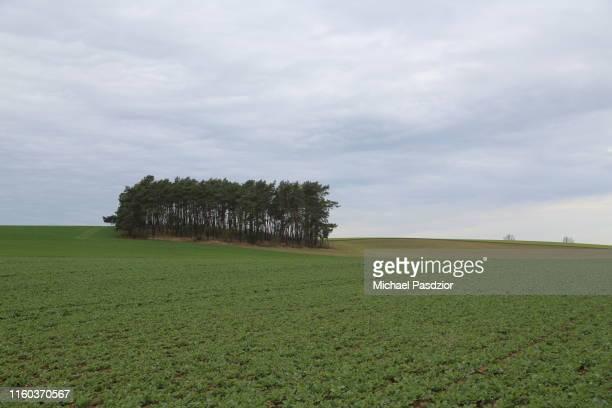 trees at agricultural landscape - ツィノヴィッツ ストックフォトと画像