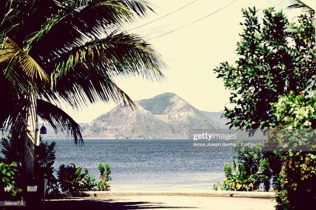 Trees At Beach Against Mountains : Stock Photo