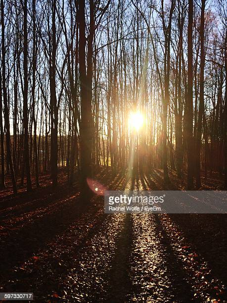 trees at forest during sunset - rachel wolfe stock pictures, royalty-free photos & images