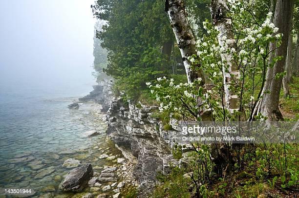 trees at lake - lake michigan stock pictures, royalty-free photos & images