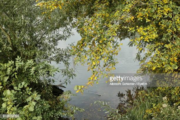 trees at lakeshore - albrecht schlotter stock photos and pictures
