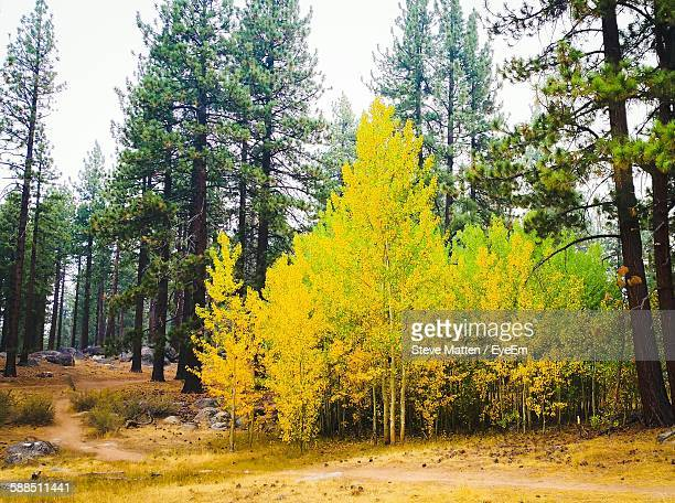 trees at park during autumn - steve matten stock pictures, royalty-free photos & images