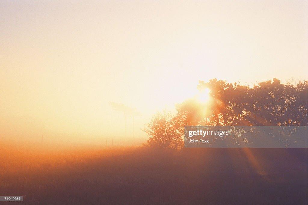trees at sunrise : Stock Photo