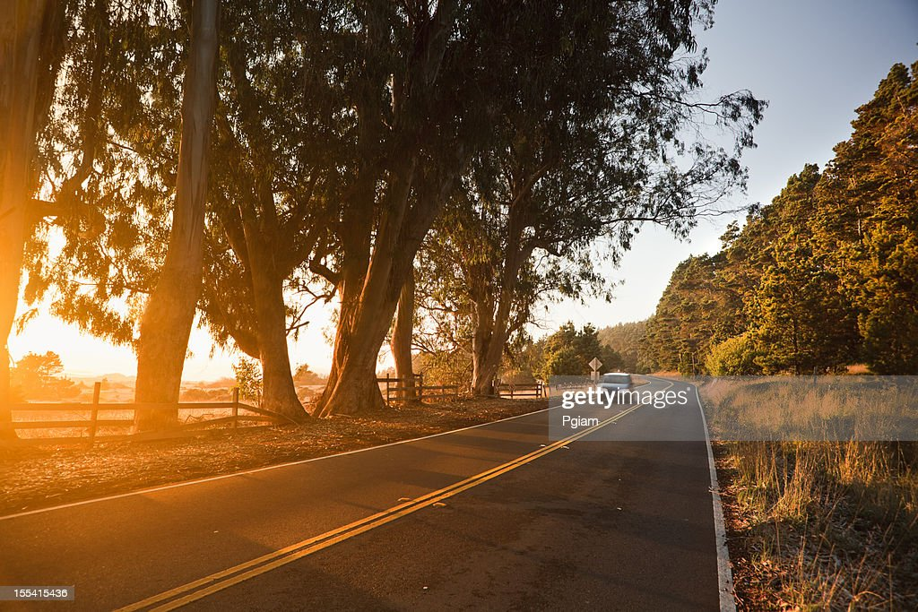 Trees at sunset over a country road : Stock Photo