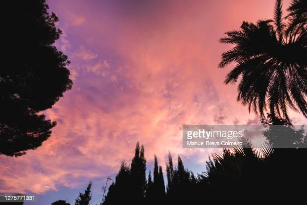 trees at sunset - benicassim stock pictures, royalty-free photos & images