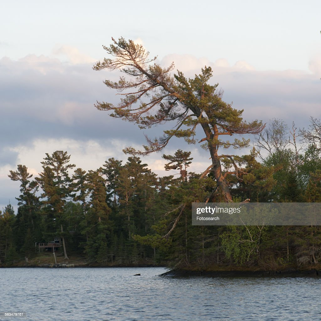 Trees at the lakeside : Stock Photo