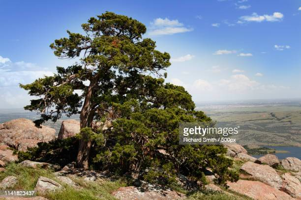 trees at the top - wichita stock pictures, royalty-free photos & images