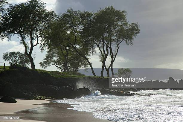 trees, beach, ocean with stormy sky - timothy hearsum imagens e fotografias de stock